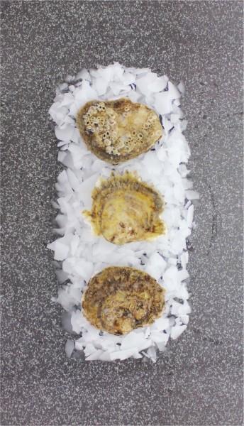 Belon Austern - Größe M (25 Stück)