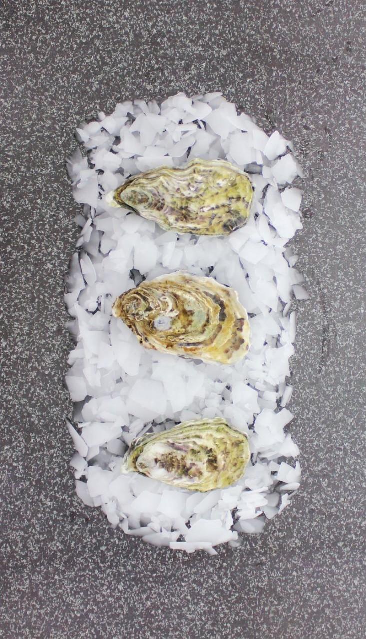 Ancelin Spéciales Austern - Größe M (12 Stück)