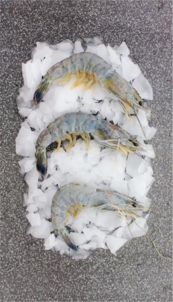 Obsiblue Garnelen mit Kopf und Schale 21-25 Stück (pro Kilo)